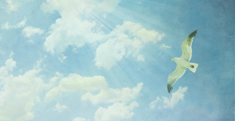 bird-sky-1-1.jpg